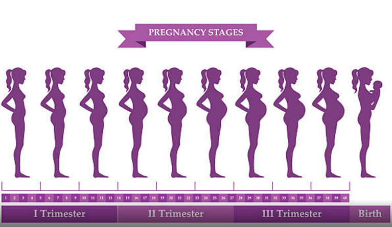 Pregnancy tips by trimester